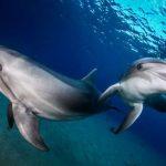 Most loved marine mammals