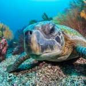 Iconic Dive Site: Punta Vicente Roca, Galápagos