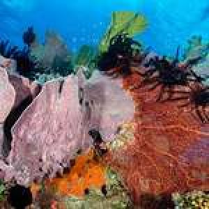 An Underwater Photographer's Guide to Papua New Guinea – Part III: New Britain Island