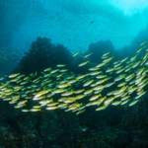 Iconic Dive Site: Richelieu Rock, Thailand