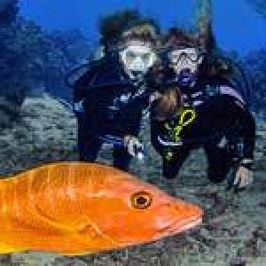 New E-Book: 101 Tips for Recreational Scuba Divers