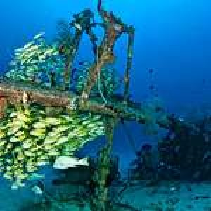 An Underwater Photographer's Guide to Papua New Guinea – Part IV: New Ireland