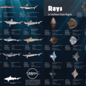 New Shark, Ray Identification Guides Published For SE Asia
