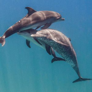 Dolphins Learn Each Others' Names To Make Teams