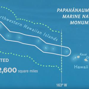 Hawaii Governor Signs Shark Take Prohibition Bill