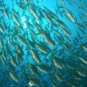 American Security Project Hosting Talks Next Week On Illegal Fishing