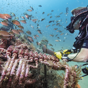 Check Out This Webinar to Learn More About How Archaeologists Are Working to Preserve Hurricane-Damaged Shipwrecks