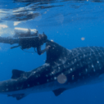 Why Tagging And Tracking Ocean Fish Is So Important