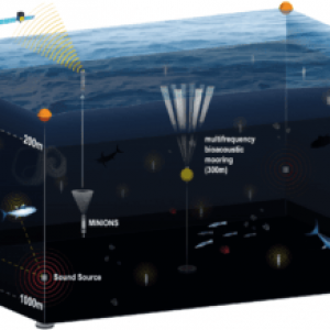 Scientists Are Developing A New Observation Network For The Ocean's 'Twilight Zone'