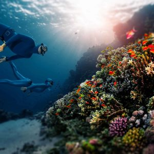A New International Coral Reef Partnership Has Been Announced