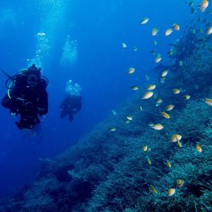 NOAA Extends Survey On Economic Impacts Of Reef Diving And Snorkeling