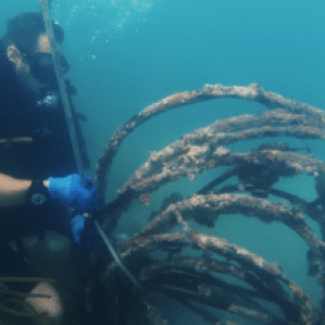Army Combat Divers Team Up to Remove Marine Debris Off Florida Keys
