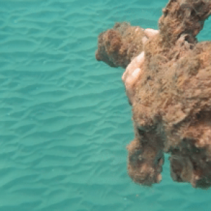 Diver Finds 900-Year-Old Crusader Sword Off the Israeli Coast