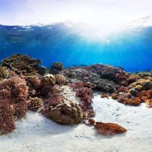 Explore the 20 best diving spots in the coral triangle