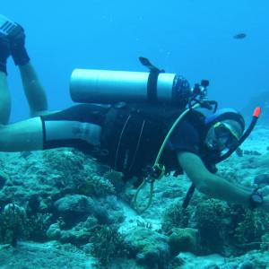 Check Out The Green Fins Diver e-Course