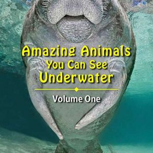 Wise Divers Ship Two New eBooks
