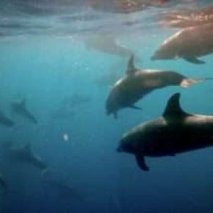 Diving The Galapagos Islands