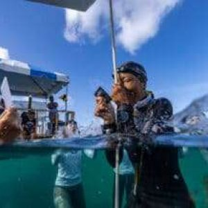 Easy 3-Part Guide to Watching a Freediving Depth Competition – Part 1: Need-to-Know Terms